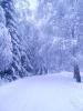 Tél a Bakonyban_1
