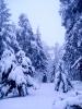 Tél a Bakonyban_2