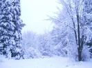 Tél a Bakonyban_3